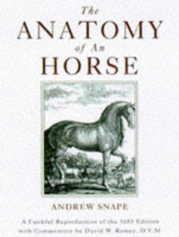 Download The anatomy of an horse