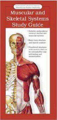 Illustrated Pocket Anatomy: Muscular And Skeletal Systems Study Guide