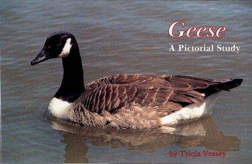 Geese a Pictorial Study by Tricia Veasey